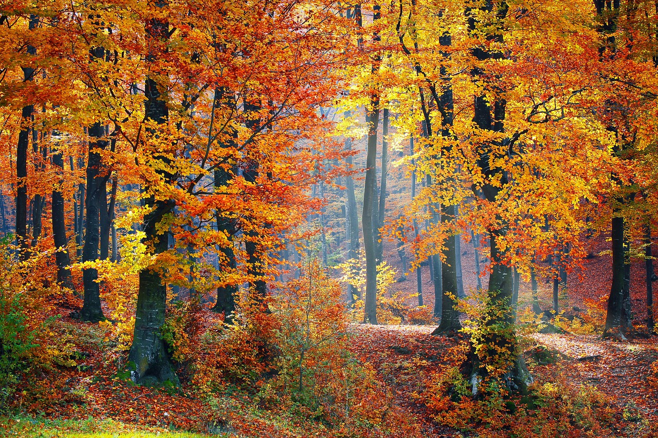 woods-1072819_1280.jpg