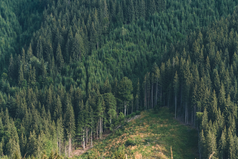 Paper's Carbon Footprint