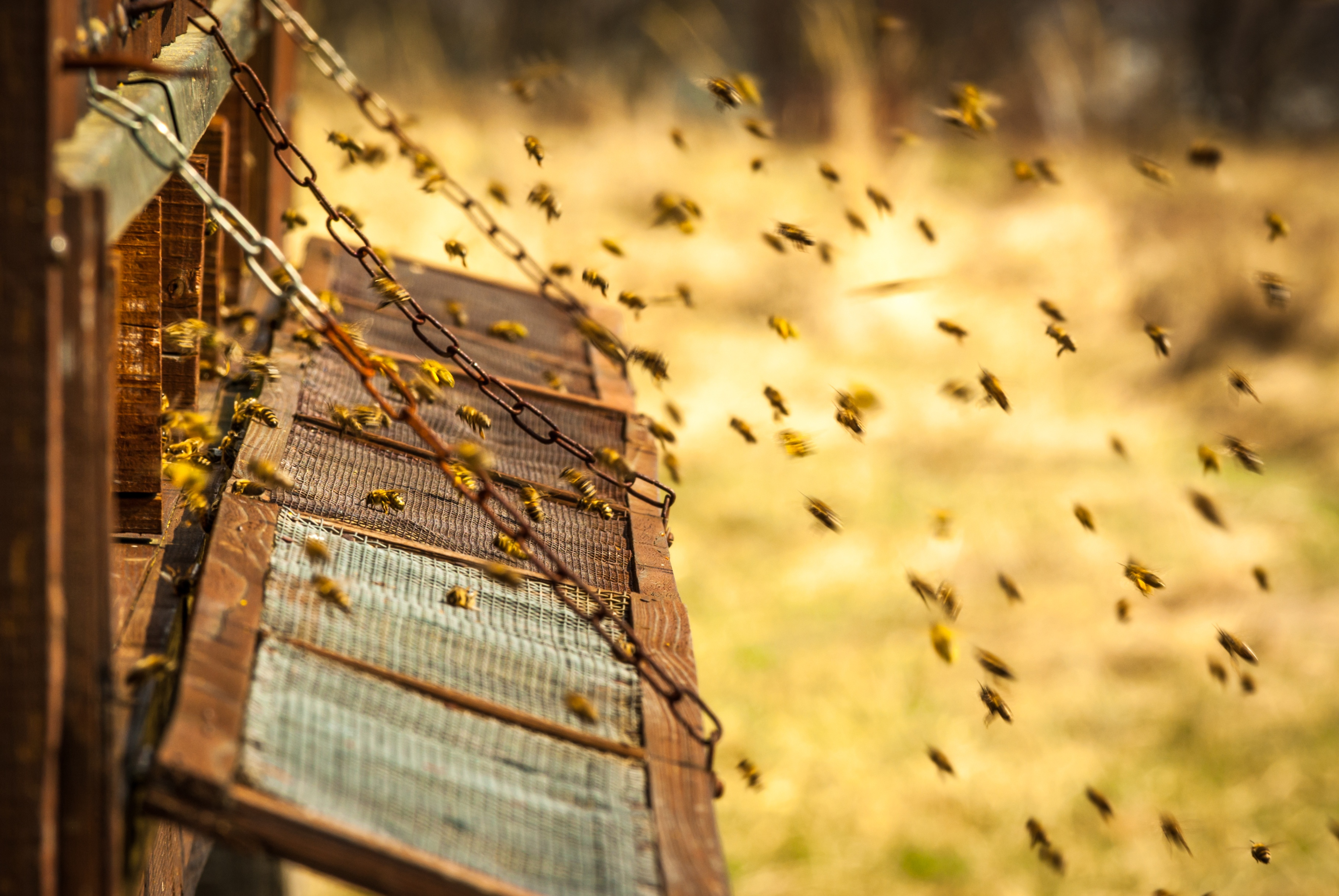 Web2Print: A Hive for the Busiest of Bees